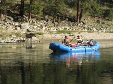 Raft and MooseSalmon River Moose