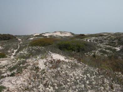 FIRE ISLAND NATIONAL SEASHORE PERMITS