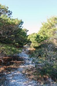 Hiking at the Jupiter Inlet Lighthouse Outstanding Natural Area