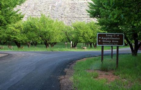 Preview photo of Capitol Reef Np Group Campsite