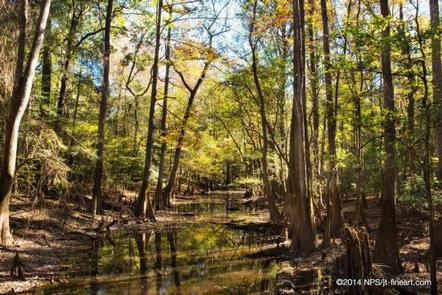 CONGAREE NATIONAL PARK CAMPING
