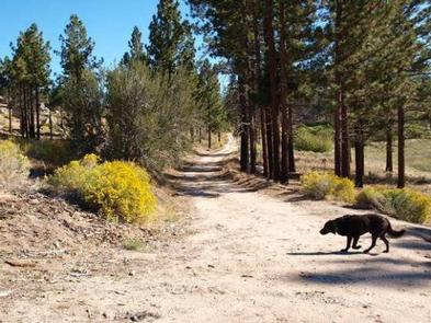 Dog talking a stroll at Ironwood Group Camp