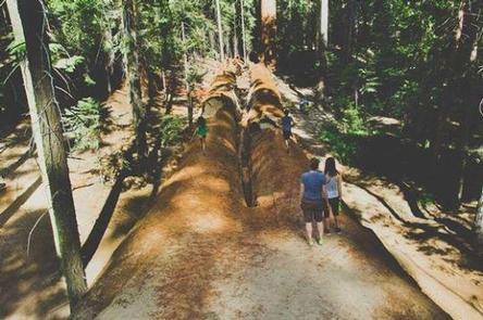 REDWOOD MEADOW