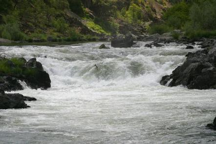 A salmon jumps in a rapid on the Rogue National Wild and Scenic River.Salmon runs occur each Spring and Fall on the Rogue.
