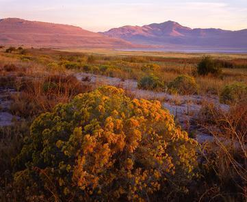 Antelope Island State ParkAn unusual ecosystem of desert plants and wildlife. Antelope Island State Park is a seasonal or year-round home for more than 250 species of birds.