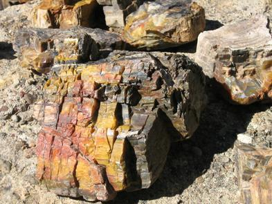 Petrified WoodColorful fragments of petrified forest are millions of years old and are protected by law.
