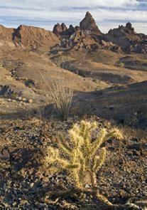 Indian Pass Wilderness