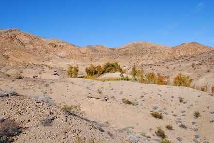 Bonanza Springs Watchable Wildlife AreaReeds and Willows in the middle of a dry desert landscape