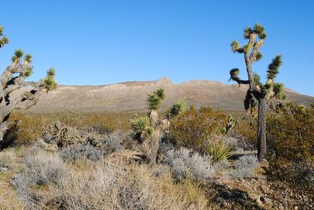 Preview photo of Mesquite Wilderness