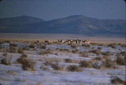 Antelope Wilderness Study Area