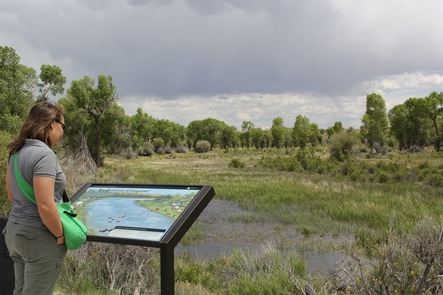A visitor reads a wayside exhibit at New Fork River Crossing Historical Park in Wyoming