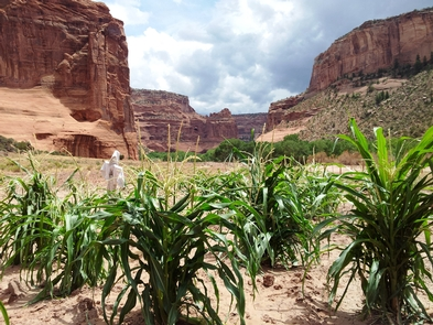 Canyon FarmNavajo families continue to live and farm in the canyon they call Tsegi