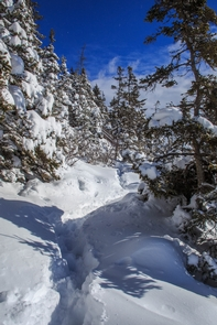 Heavy snow-laden treesDuring the colder months snows transform our landscape into a winter wonderland.