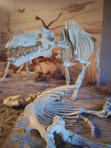 Preview photo of Agate Fossil Beds National Monument