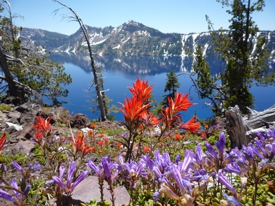 Wildflowers on Wizard IslandWildflowers along the Wizard Island Summit Trail