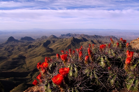 South Rim VistaSouth Rim Vista and Claret Cup Cactus