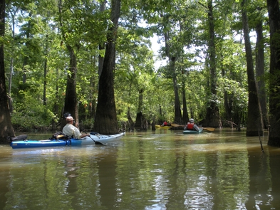 Kayakers in Cooks LakeKayaking is a popular way to explore the many waterways in the Big Thicket. Here, kayakers paddle along the Cooks Lake Paddling Trail near Beaumont.