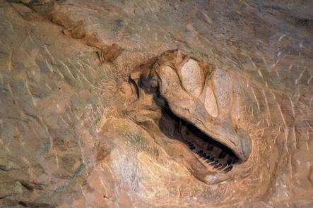 Camarasaurus SkullOver 1500 fossilized bones of various dinosaurs are still embedded in the cliff face including a skull and several neck vertebrae of a camarasaurus