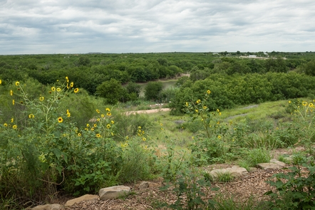 El Paso de Jacinto/Paso de los Indios, Webb County, TexasAround 1746, explorer Jacinto de Leуn discovered a ford that allowed safe passage across the Rнo Grande in this vicinity; it had probably been used for centuries by American Indians.
