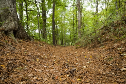 Mission Tejas State Park, Houston County, TexasThis 1.5-mile-long trail segment crosses an area that has remarkable visual integrity. The trail segment courses parallel to State Road 21 and at times crosses the highway.