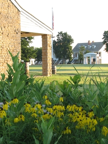 Sunflowers at Fort ScottA field of sunflowers adds a splash of color to a view of the parade ground at Fort Scott.