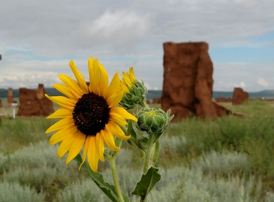 Sunflower in Enlisted BarracksLocated deep within the Mora Valley, Fort Union National Monument contains a vast array of plant and animal life.