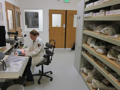 Paleontologist at workThe Thomas Condon Paleontology Center is both a visitor center and research center.