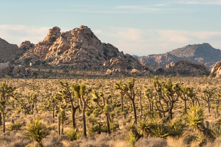 Lost Horse ValleyTake in views of the park's iconic Joshua trees and rock outcrops in Lost Horse Valley.