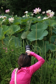 Capturing MomentsThe summer blooms in and around the ponds attract many photographers and artist from around the world.