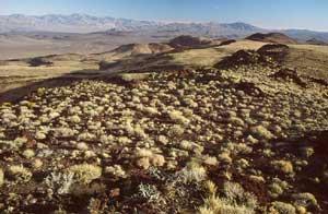 Malpais Mesa Wilderness