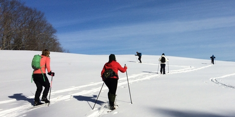 Winter at Marsh-Billings-RockefellerCross-country skiiers enjoy a brilliant day in the park!