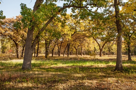 Savanna at Coldwater SpringVisitors can glimpse the past in the Coldwater Spring savanna restoration.