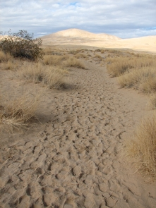 Hiking Opportunities AboundMojave has endless options for hikers. Kelso Sand Dunes are a popular trail in cooler months.