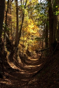 """Potkopinu Section of the Natchez Trace National Scenic TrailThe Potkopinu section, between milepost 17 and 20, follows the historic Old Trace. The """"sunken"""" nature of the trail is due to the footsteps of thousands of travelers between the 1780s and 1820s in the soft loess soil."""