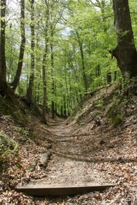 Rocky Springs Section of the Natchez Trace National Scenic TrailA section of the Old Trace at Rocky Springs (MP 52.4-59)