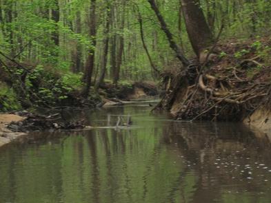 Greenbelt ParkStill Creek at Greenbelt Park