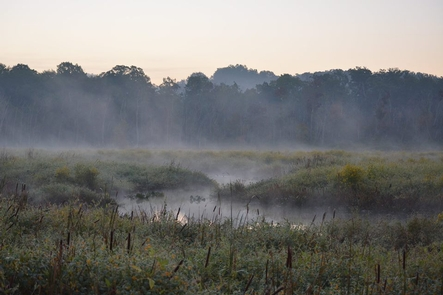 Piscataway ParkAccokeek Creek Site is a part of Piscataway Park.  The boardwalk takes you over the wetlands.