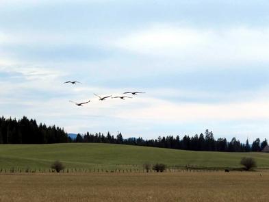 Take FlightBirds take flight across a grassy field.