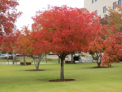 Preview photo of Oklahoma City National Memorial