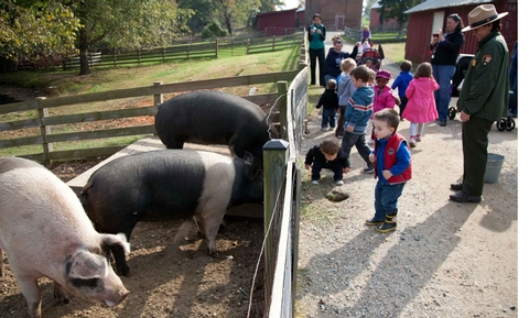 PigsYoung visitors meet the pigs at Oxon Hill Farm.