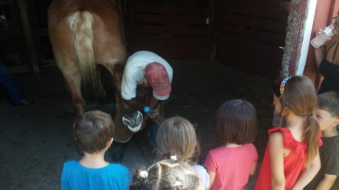 FarrierOur farrier regularly maintains the hooves of the horses at Oxon Hill Farm.