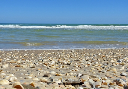 Big Shell Beach at Padre Island National SeashorePadre Island National Seashore has over 70 miles of undeveloped coastline with ample beachcombing opportunities.