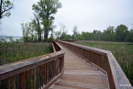Accokeek Creek Site BoardwalkBoardwalk over Accokeek Creek.