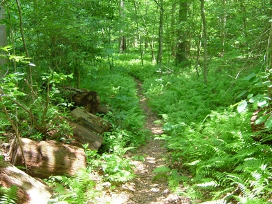 Farms to Forest TrailThe Farms to Forest Trail is a favorite among visitors.