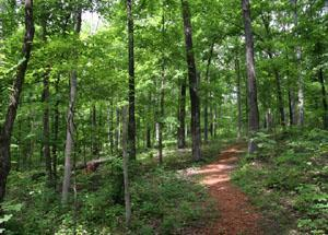 Preview photo of Crab Orchard Wilderness
