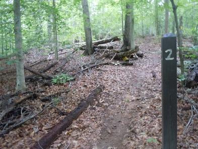 Campsite #2 MarkerA trailside marker notes the entrance to campsite #2