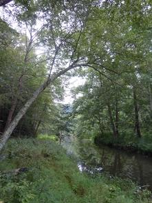 Chopawamsic Creek in the backcountry areaThe Chopawamsic Creek lies off-trail in the backcountry area.
