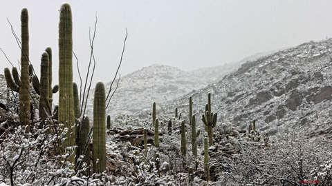 Weather at Saguaro National ParkSaguaro National Park summers can be extremely hot with temperatures exceeding 105 degrees F, lows averaging 72 degrees F.  Winters are mild warm days averaging 65 degrees F and cool nights averaging 40 degrees F. Snowfall is extremely rare in the area.