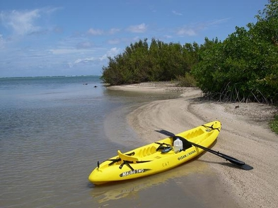 Kayak Salt RiverKayaking is a great way to see our mangroves and beaches!