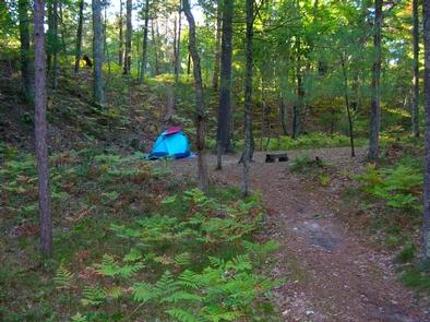 White Pine CampsiteWhite Pine campsite